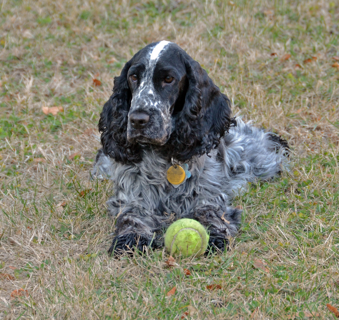 Bess and ball