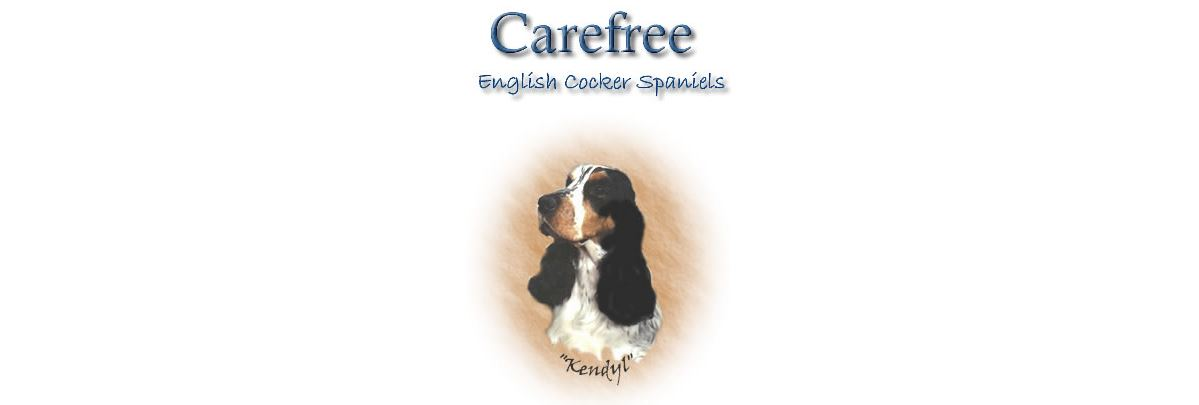 Carefree English Cocker Spaniels