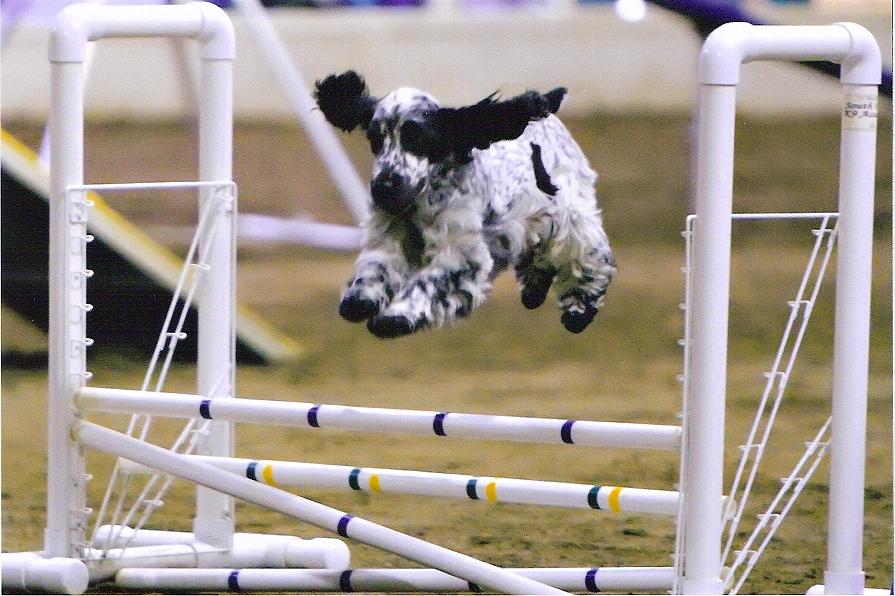 Liza jumping